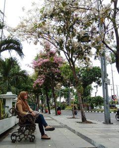 Bunga Tabebuya Surabaya IG 4