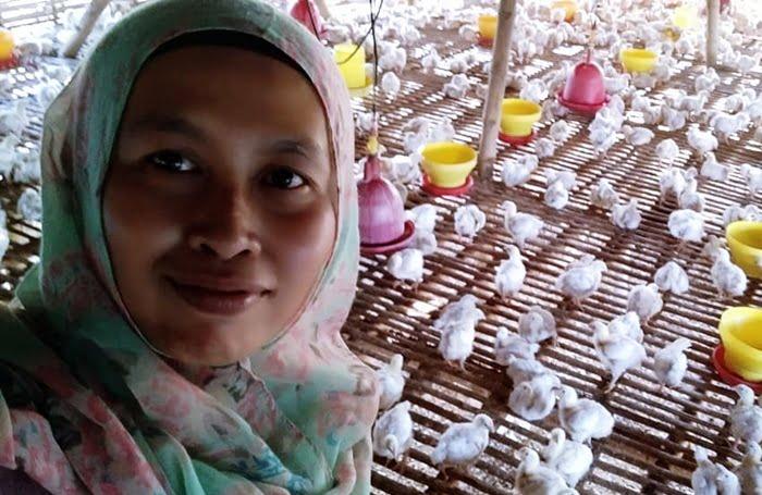 Harga Ayam Potong Di Wilayah Majalengka Makin Murah Igmistiprihatini