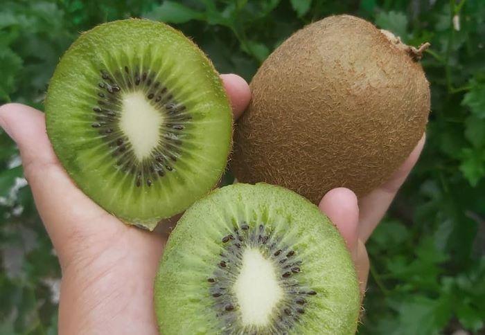 Manfaat Buah Kiwi IGplant.shop.mlg